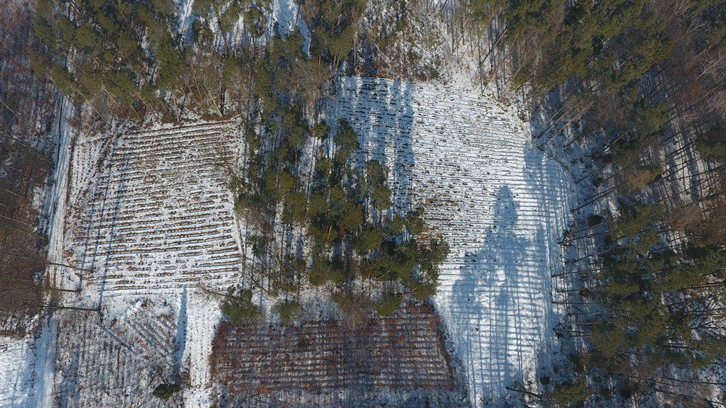 Zdjęcie z lotu drona - kontrola wycinek i nasadzeń na terenie Lasów Państwowych