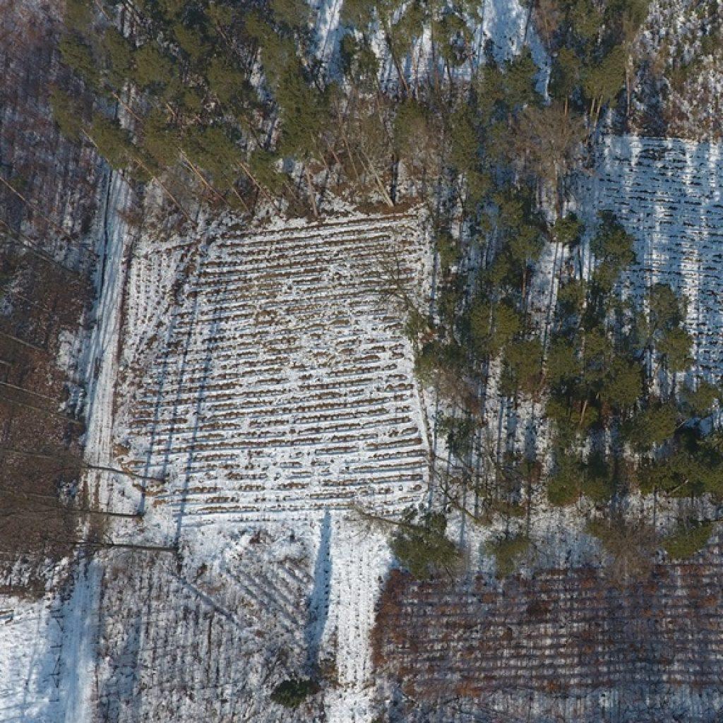 Zdjęcie z drona - kontrola wycinek i nasadzeń na terenie Lasów Państwowych - ortofotomapy